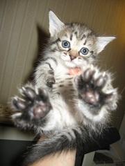 Пушистые и веселые котята ищут хозяев