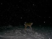 щенки западно-сибирской лайки рязань