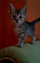 Котятки игривые и любознательные