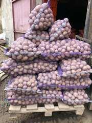 Продается картофель оптом от производителя,  Спас-Клепики